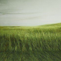 Backgrounds - walimex pro Photo Motif Background Grass, 3x6m - quick order from manufacturer